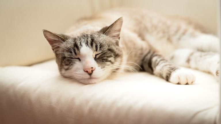 Close-up van het kopje van een slapende kat. Huisdierenfotograaf Studio Ketels. Portret van een kat